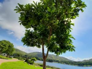 迪欣湖16